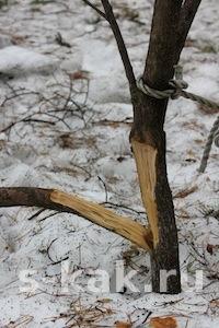 Сломаные ветки