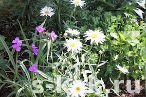 Как украсить и придать стиль садовому участку