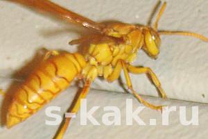Как избавиться от мух, комаров, муравьев и других насекомых