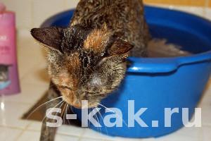 Как купать кошку или кота