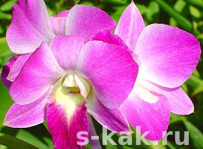 Как поливать орхидеи