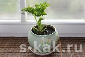 Как выращивать зелень дома на подоконнике