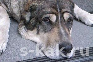 Как определить, что собака заболела