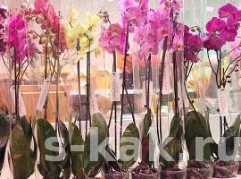 Как ухаживать за домашней орхидеей. Руководство по месяцам