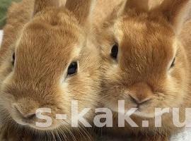 Как содержать кроликов