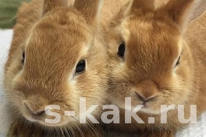 Как содержать кроликов. 3 способа