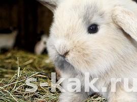 Как и чем кормить кроликов
