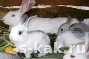 Как выбрать кроликов для разведения или кролиководство как бизнес
