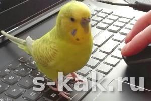 Как приручить попугая