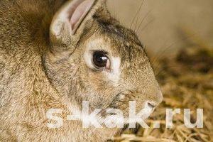 Как освежевать кролика