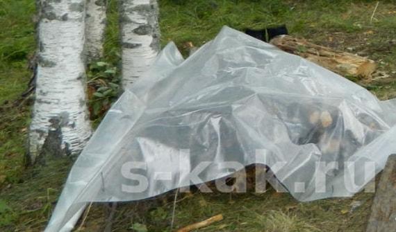 Дрова укрытые полиэтиленом в лесу