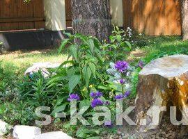 Как убрать пни на садовом участке. 3 способа